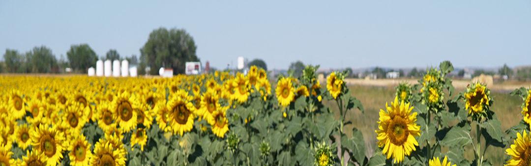 Minnesota legislature passes young farmer credit